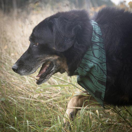 zaļš suņu lakatiņš